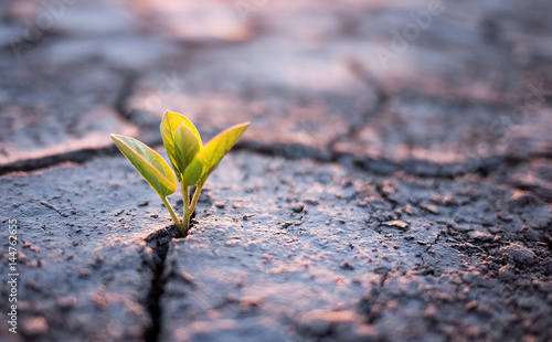 Vászonkép Green plant sprout in desert