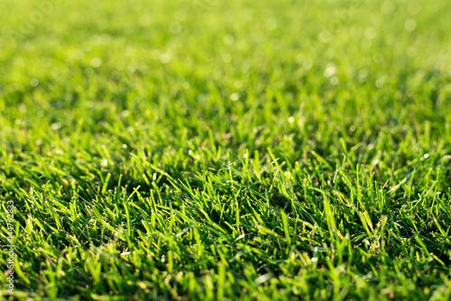 Fotografie, Obraz  Grass on the football pitch