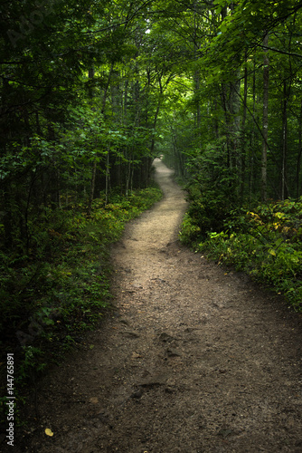 Tuinposter Weg in bos Pathway winding through green forest