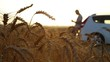 Man stuck with car in a wheat field