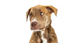 Closeup Of Sad Guilty Puppy