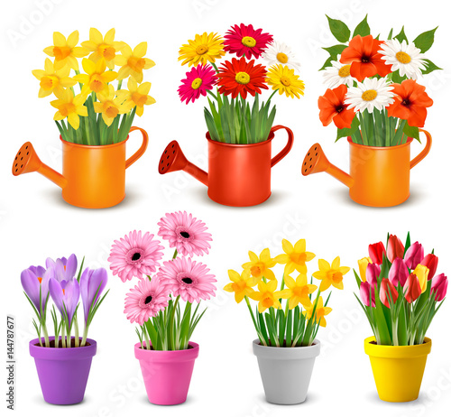 Spring and summer colorful flowers in pots  Vector Wallpaper Mural