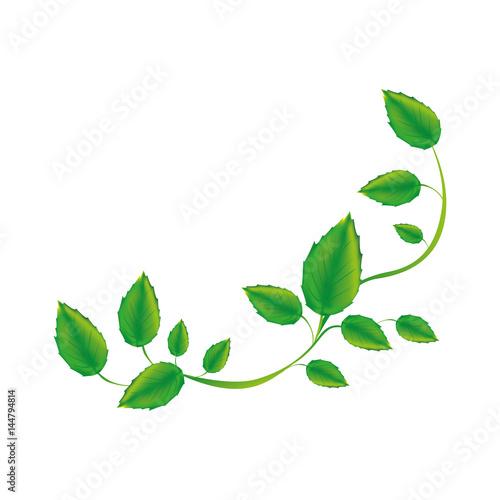 Fotografia white background with green creeper vector illustration
