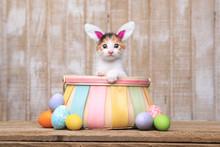 Adorable Kitten Inside An Easter Basket Wearing Bunny Ears