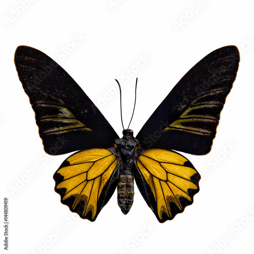 Photo Butterfly stuff isolated on white background : Golden birdwing (Troides aeacus)