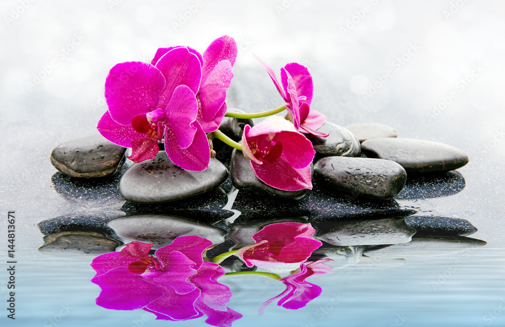 Fototapety, obrazy: Pnk orchids and black stones close up.
