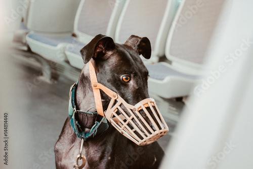 Foto  Dog wearing muzzle at subway