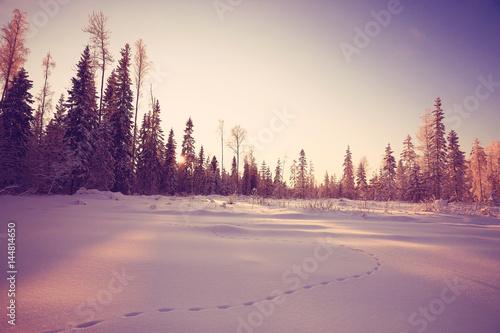 Foto op Aluminium Blauw winter landscape with a horizon, field and sky