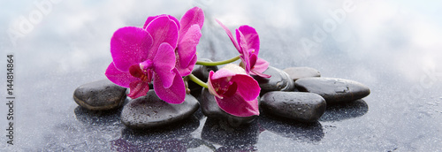Obrazy one color   pnk-orchids-and-black-stones-close-up