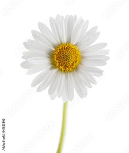 In de dag Madeliefjes Daisy