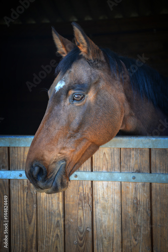 Bay horse head looking out of his stable Canvas-taulu