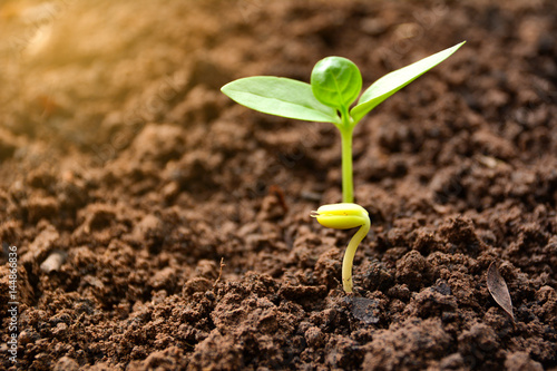 Seedling and plant growing in soil on nature background