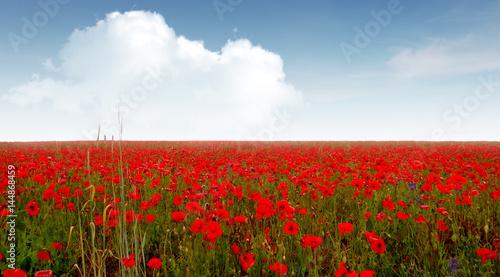 Foto op Plexiglas Klaprozen Field with poppy flowers