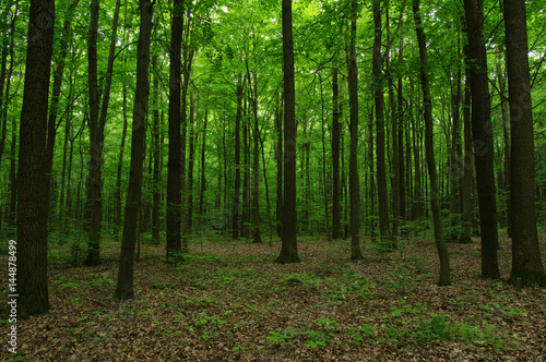 Fotobehang Bossen Trees in green forest