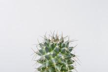Top Of Cactus Plant