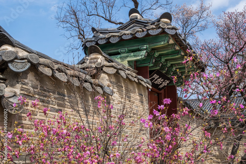 Blossoms in spring at Changdeokgun Palace in Seoul, South Korea Poster