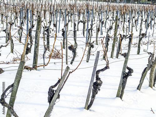 Fotografía  Weinbau im Winter mit Schnee, Österreich, Wien, 19. Bezirk