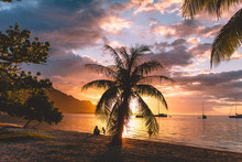 Scenic View Of Palm Tree With Sea At Sunset