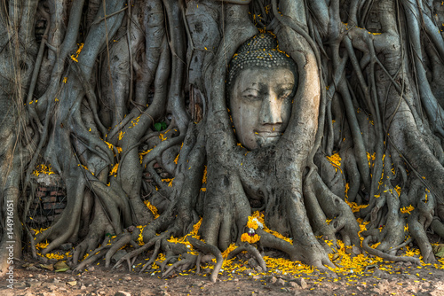 Fotomural  The ancient Head of Buddha Statue in the Tree Roots at Wat Mahathat temple the historic site of Ayutthaya province, Thailand