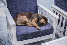 Stray Dog Sleeping On A Chair In A Coffee Shop