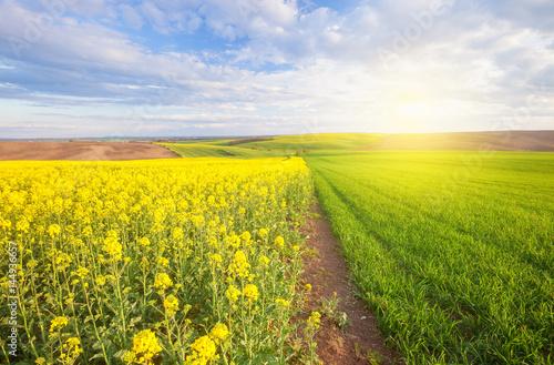 Deurstickers Geel Beautiful sunny landscape