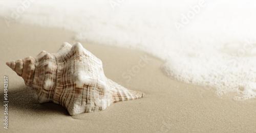 Fotografie, Obraz  Shell on the beach