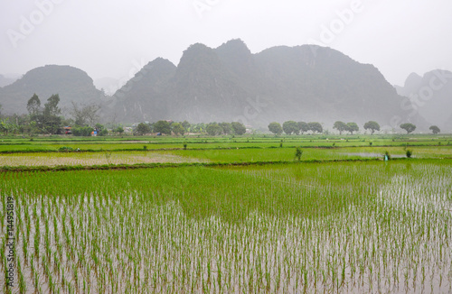Poster Lime groen Vietnam landscape. Rice fields and karst towers in Ninh Binh