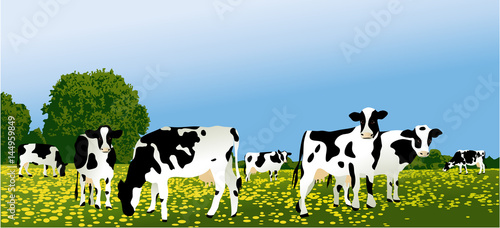 Foto Herd of cows at green field