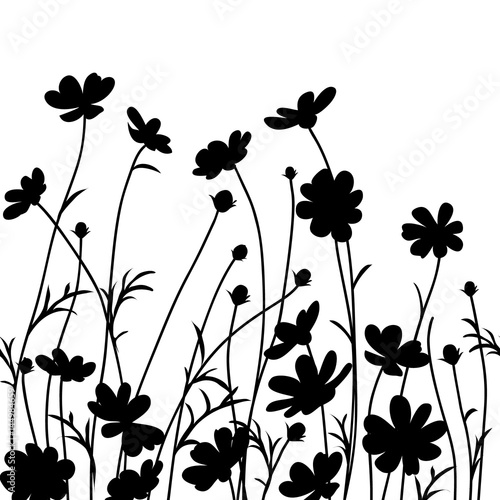 Letni ogród. Kosmosu kwiatu sylwetka odizolowywająca na bielu. Ilustracji wektorowych