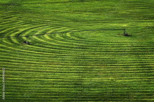 Photo sur Toile Les champs de riz Farm Field with Circle Pivot Irrigation Sprinkler