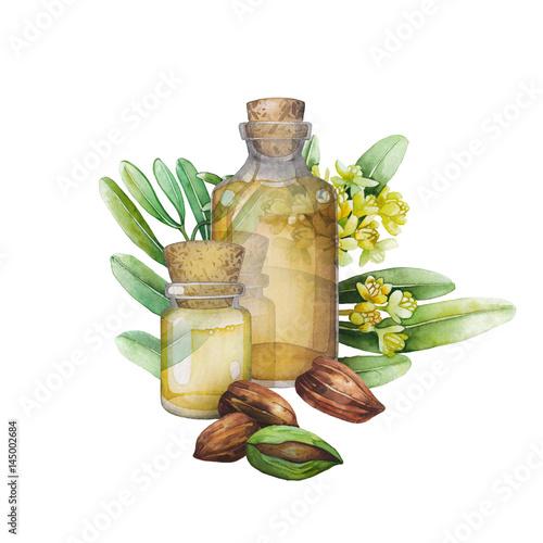 Valokuvatapetti Watercolor jojoba plant