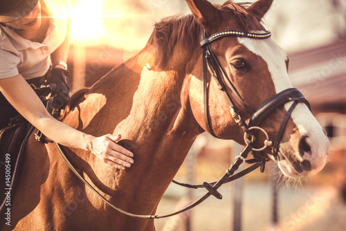 Fototapeta Hand of female rider rubbing horse obraz