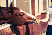 Girl Feeding Her Horse In A St...