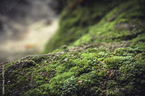 Fotografie, Obraz  Mossy stone in highlands with blurred background