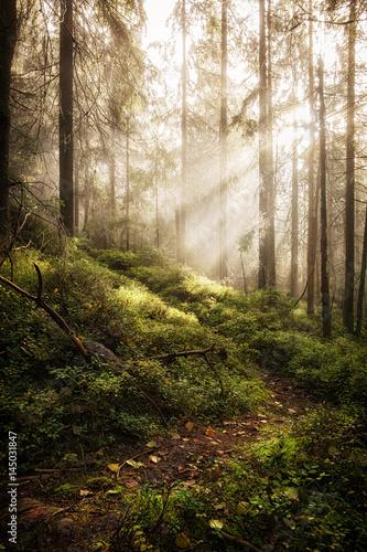 Fototapeten Wald Deep misty forest.