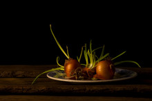 Still Life With Onions Giving ...
