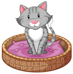 Gray cat in basket