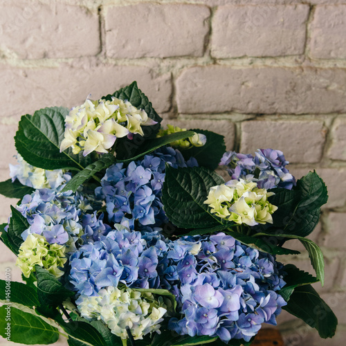 Foto op Aluminium Pauw Beautiful blue hydrangea flowers. Flower pattern. Close up. Summer floral background