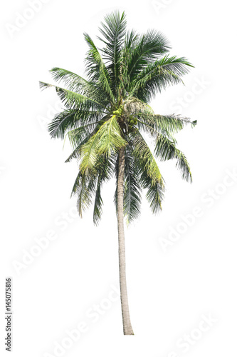 Canvas Prints Palm tree Tree isolated on white background. Coconut tree.