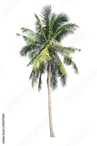Aluminium Prints Palm tree Tree isolated on white background. Coconut tree.