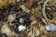 Beachcombing Find. Marine And Coastal Debris Background Image.