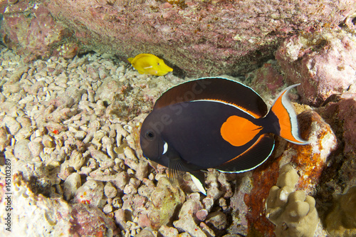 Achilles tang in hawaii Canvas Print
