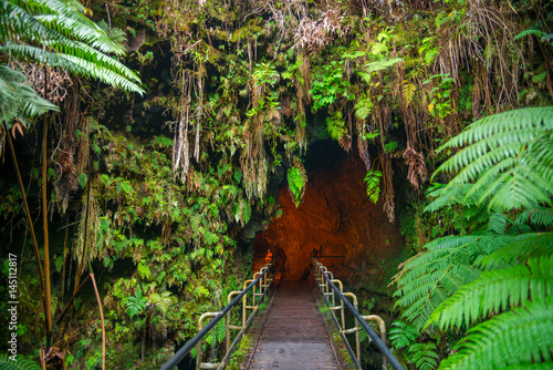 In de dag Natuur Park The Thurston Lava Tube in Hawaii Volcano National Park, Big Island
