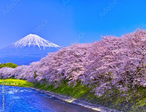 Foto op Plexiglas Kersenbloesem 富士市 桜咲く潤井川から見た富士山