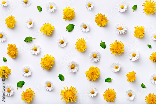 Foto op Canvas Madeliefjes Daisy and dandelion pattern. Flat lay spring and summer flowers with green leaf on a white background. Repeat concept. Top view