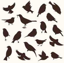 Vector Set Of Bird Silhouette....