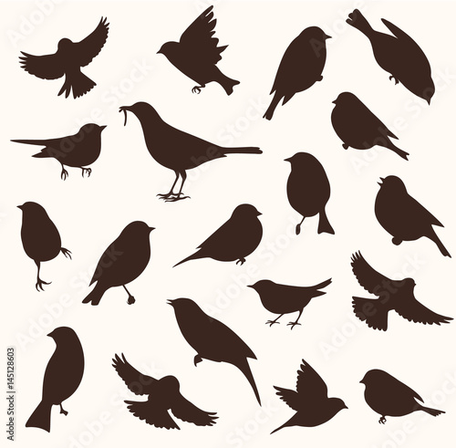 Vector set of bird silhouette. Sitting and flying birds Fotomurales