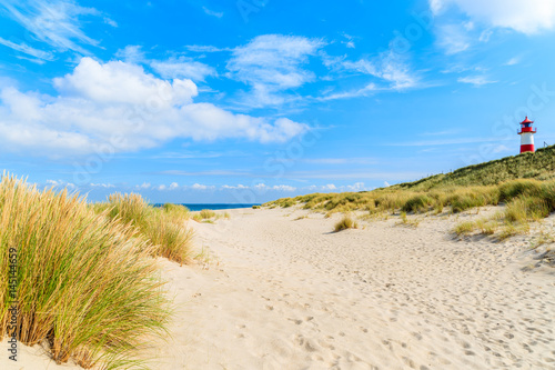 Foto-Rollo - Grass on sand dunes at Ellenbogen beach, Sylt island, Germany