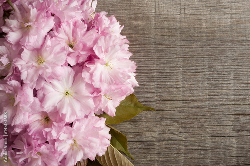 Poster de jardin Dahlia Pink Kwanzan cherry blossoms on a wooden background with copy space