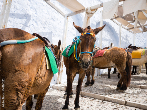 The donkeys in Santorini island